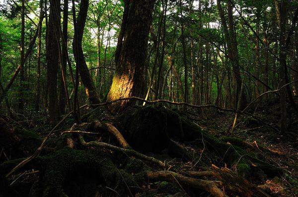 bosque japon - 10 sitios turísticos que seguro te darán escalofríos