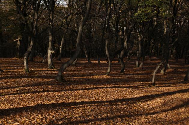 bosque padurea - 10 sitios turísticos que seguro te darán escalofríos